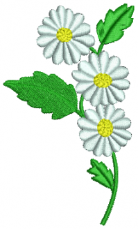 Oxeye_daisy._4b430c0ff2d54.png